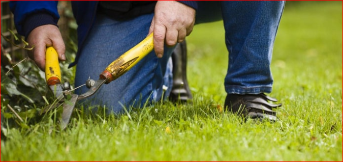 Use These Tips To Hire A licensed and Experienced Landscaping Company